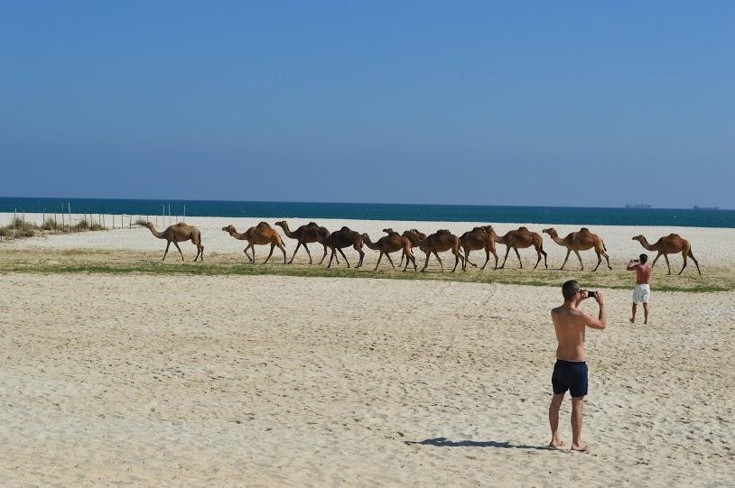 Hilton Salalah Oman review 1