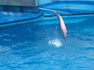 Ocean Park Hong Kong review dolphin show