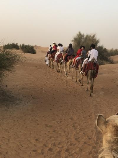 Marriott Al Maha Desert Resort Dubai camel trekking