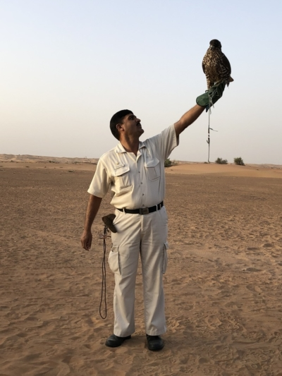 Marriott Al Maha Desert Resort Dubai falconry