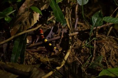 review Yatama Ecolodge Costa Rica