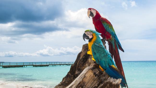 Virgin Atlantic Caribbean discount